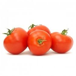 Tomate GG Ibicenco