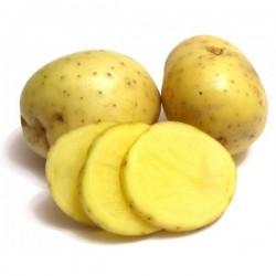 Patata Blanca Monalisa